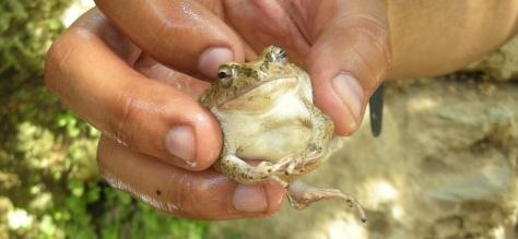 Albert The Frog