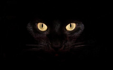 black-cat-desktop-backgrounds-wallpaper